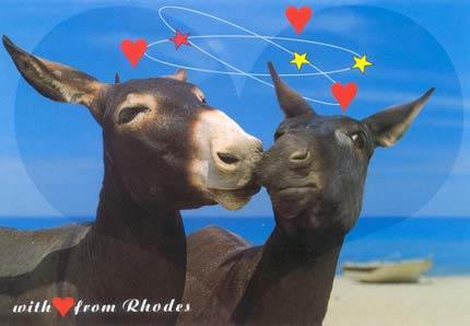 donkey with love from rhodes
